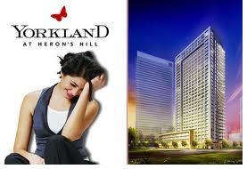 yorkland-logo-and-pic.jpg